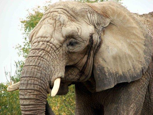african-elephant-drawing-wallpaper-3.jpg